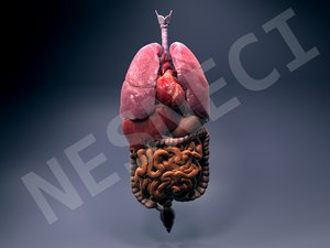obj internal organs