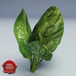 3d spinach modelled