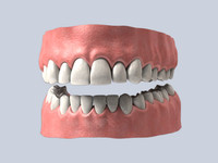 3d mouth teeth model