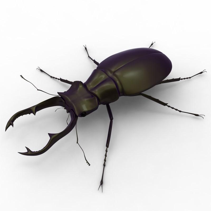 stag beetle obj