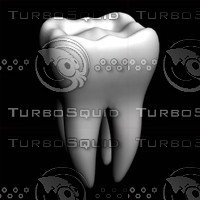 3d human tooth model
