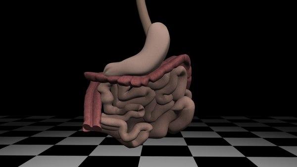bowel stomach c4d