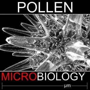 pollen spore 3d model