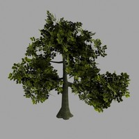 Oak Tree Low Poly