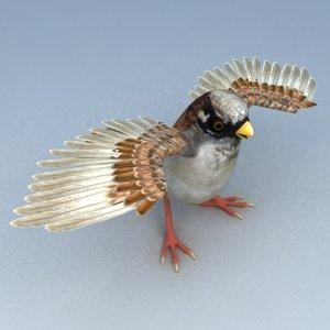 sparrow birds cities 3d model