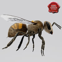 3ds bee modelled