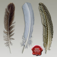 Bird feathers collection