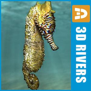 3ds max seahorse sea