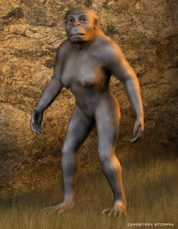 3d model lucy australopithecus