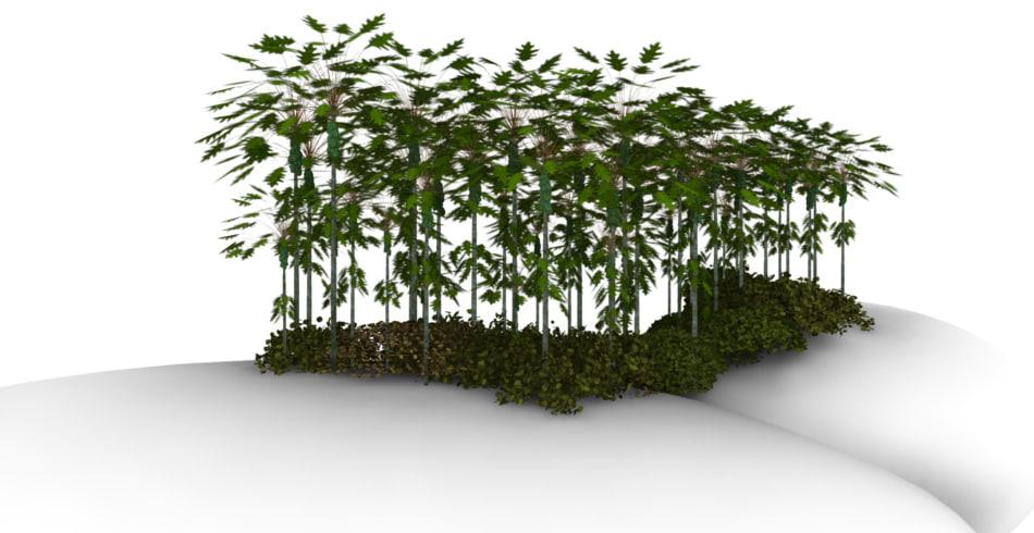 3d cocan trees model