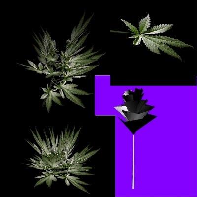 marijuana plant 3d model