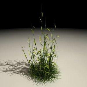 maya reed plant