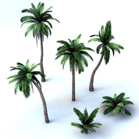 obj mode palm trees