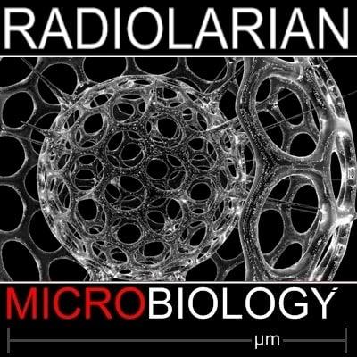 radiolarian science 3d model