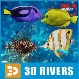 maya set coral reef fish