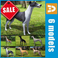 greyhound dogs 3d 3ds