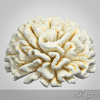 3d fake coral