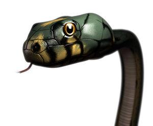 snake head obj