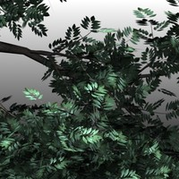 elm trees 3d model
