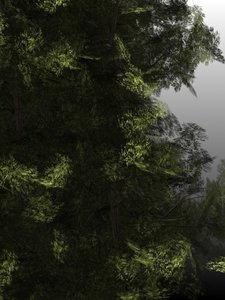 yew trees 3d max