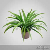 3d chlorophytum houseplant model