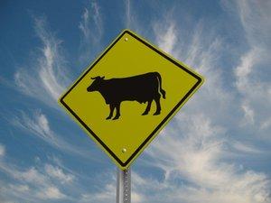 cattle crossing street sign 3d model