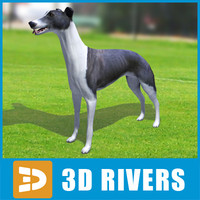 3d greyhound dogs