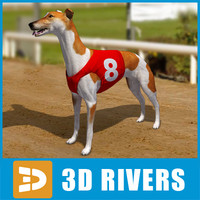 3d model greyhound dogs
