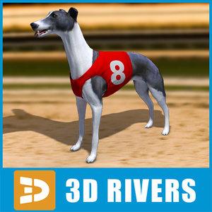 greyhound dogs max