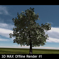 oak tree oaktree1 3d 3ds