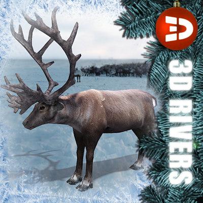 3d reindeer deer model
