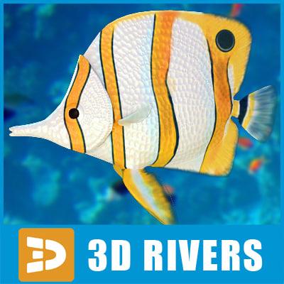 3d model butterflyfish fish butterfly