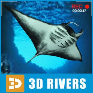 manta rays 3d model