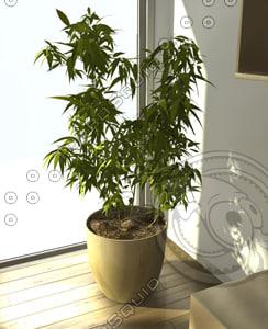 bamboo c4d
