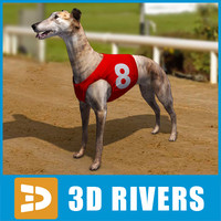 3ds greyhound dogs