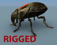 obj padi field beetle