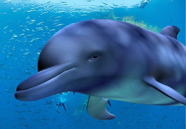 dolphin 3d max