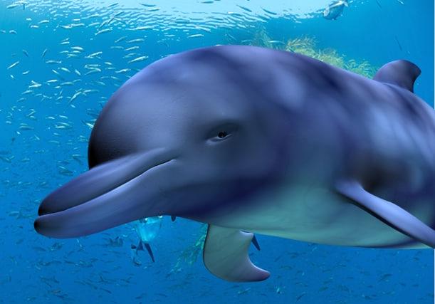 dolphin 3d max