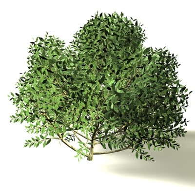 3d model little bush