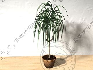palme plant c4d