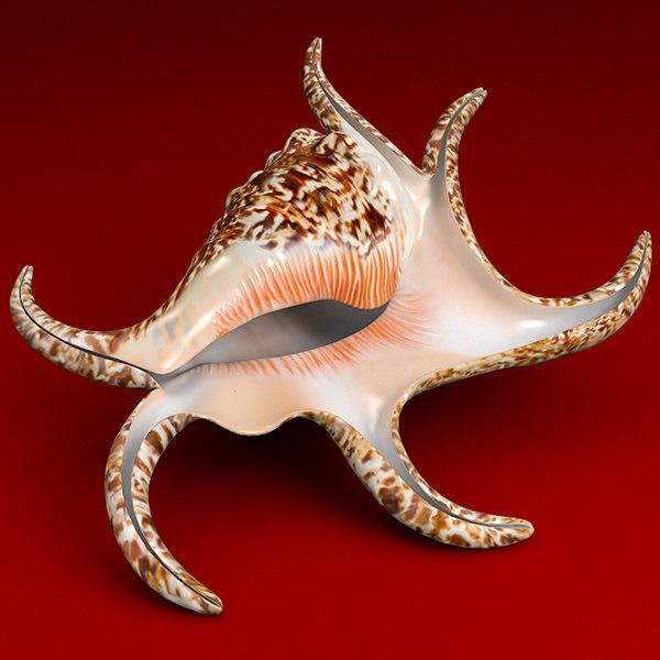 3d seashell chiragra