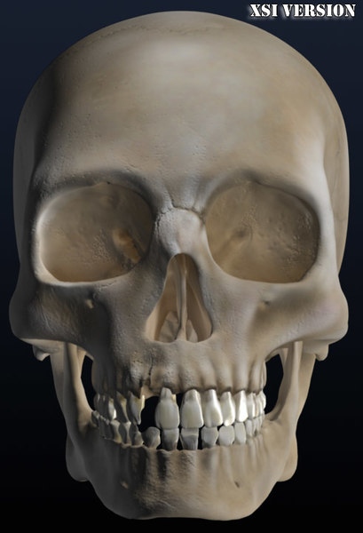 3ds max old skull