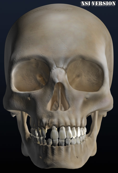 3ds max old skull