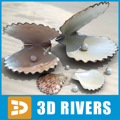 3d model pearl seashell sea