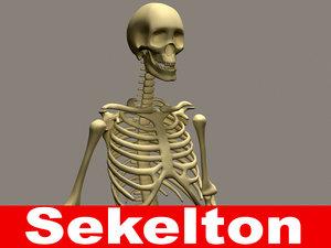 skeleton 3d 3ds