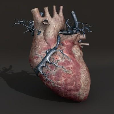 human heart 3d c4d