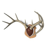 mounted deer antlers 3d 3ds