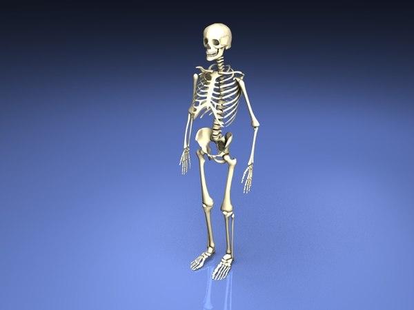 max skeleton