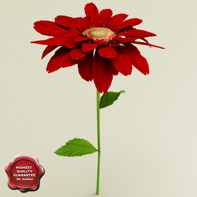 gerbera modelled 3d model