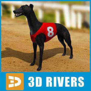 maya greyhound race dogs